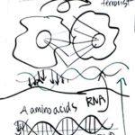 4Cells - Business Models & Mental Models